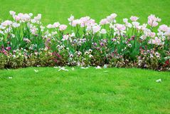 Colorful flowers garden bed in spring Royalty Free Stock Image
