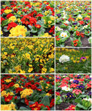 Colorful flowers in the garden collage stock photo