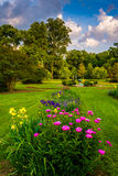 Colorful flowers in a garden at Druid Hill Park, in Baltimore, M Stock Photos