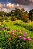 Colorful flowers in a garden at Druid Hill Park, in Baltimore, M Stock Images