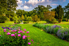 Colorful flowers in a garden at Druid Hill Park, in Baltimore, M Royalty Free Stock Images