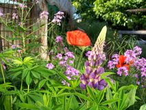 Colorful flowers in the garden Stock Photo