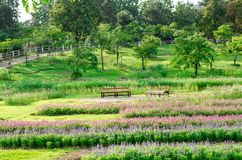 Colorful flowers garden park in Thailand Royalty Free Stock Images