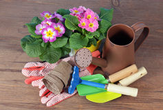Colorful flowers and garden tools Stock Image