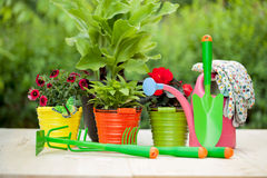 Colorful flowers and garden tools on  wooden table Stock Image