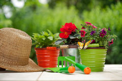 Colorful flowers and garden tools on  wooden table Royalty Free Stock Photos