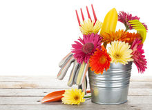 Colorful flowers and garden tools Stock Photo