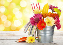 Colorful flowers and garden tools Royalty Free Stock Photography