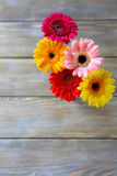 Colorful flowers - gerbera Stock Image
