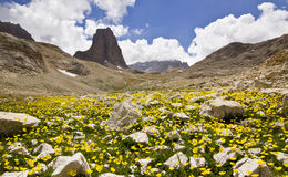Colorful flowers and grass with big rock in Turkey mountains Royalty Free Stock Images