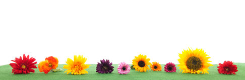 Colorful flowers on green grass Royalty Free Stock Image