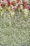 Colorful flowers with green wall for wedding backdrop