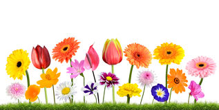 Image result for flowers growing