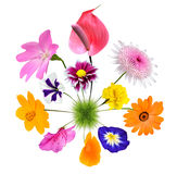 Colorful Flowers growing on little grass planet Royalty Free Stock Image