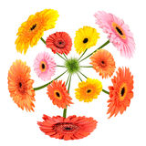 Colorful Flowers growing on little grass planet Royalty Free Stock Photography