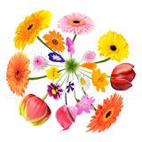 Colorful Flowers growing on little grass planet Royalty Free Stock Images