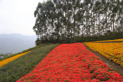 Colorful flowers on the hillside Stock Photography