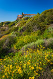 Colorful flowers on a hillside in San Clemente royalty free stock photos