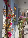 Colorful flowers on house front in Crete stock photos