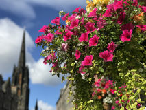 Colorful flowers with the The Hub, Assembly Hall Royalty Free Stock Photos