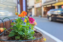 Colorful flowers infront of cafe shop in Kyoto Royalty Free Stock Photography