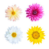 Colorful flowers isolated Stock Photo