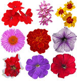 Colorful flowers isolated on white background Stock Photography