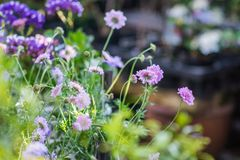 Colorful Flowers of Japan. Different kind of colorful japanese flowers with soft background, arranged royalty free stock images