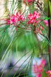 Colorful Flowers of Japan. Different kind of colorful japanese flowers with soft background, arranged royalty free stock photos