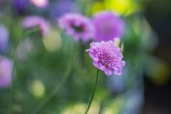 Colorful Flowers of Japan. Different kind of colorful japanese flowers with soft background, arranged stock photo