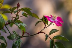 Colorful Flowers of Japan. Different kind of colorful japanese flowers with soft background, arranged royalty free stock image