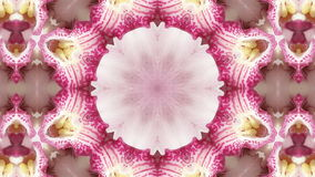 Colorful Flowers Kaleidoscope Stock Photography