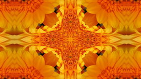 Colorful Flowers Kaleidoscope stock footage