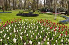 Colorful flowers in the Keukenhof Garden in Lisse, Holland, Netherlands. Lisse Netherlands - April 19, 2017: Colorful flowers in the Keukenhof Garden in Lisse royalty free stock image