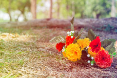 Colorful flowers on lawn in the garden Royalty Free Stock Image