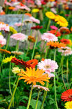 Colorful flowers on a meadow. Stock Images