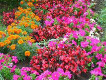 Colorful flowers. Background of flowers. Stock Photos
