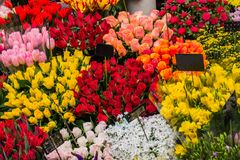 Colorful flowers in Osaka flower market. Stock Photo