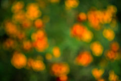 Colorful flowers out of focus. Stock Photos