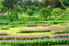 Colorful flowers at outdoor garden in Chiang Mai,Thailand Royalty Free Stock Image