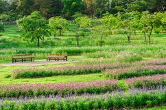 Colorful flowers at outdoor garden in Chiang Mai,Thailand Stock Image