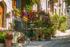 Colorful flowers outside a italian home Stock Photos