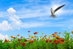Colorful flowers over blue sky Stock Photography
