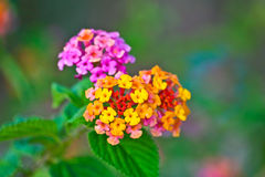 Colorful flowers in a park. Colurful flowers in a park on spring Royalty Free Stock Photo
