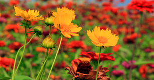 Colorful flowers and parks Royalty Free Stock Image