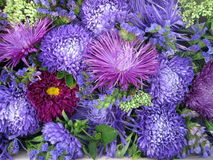 Colorful  flowers pattern Stock Photos