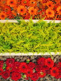 Colorful flowers pattern Stock Photo
