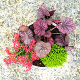 Colorful flowers and plants in a pot Royalty Free Stock Images