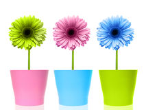 Colorful flowers Stock Images