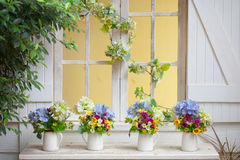 Colorful flowers pots Stock Images